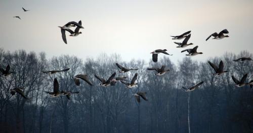 40 перелетных птиц на Алтае застрелят для выявления птичьего гриппа