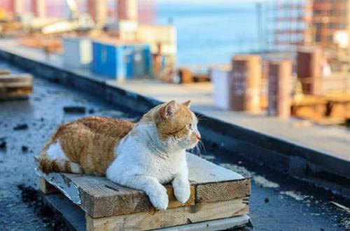Кот Мостик предвкушает открытие Крымского моста
