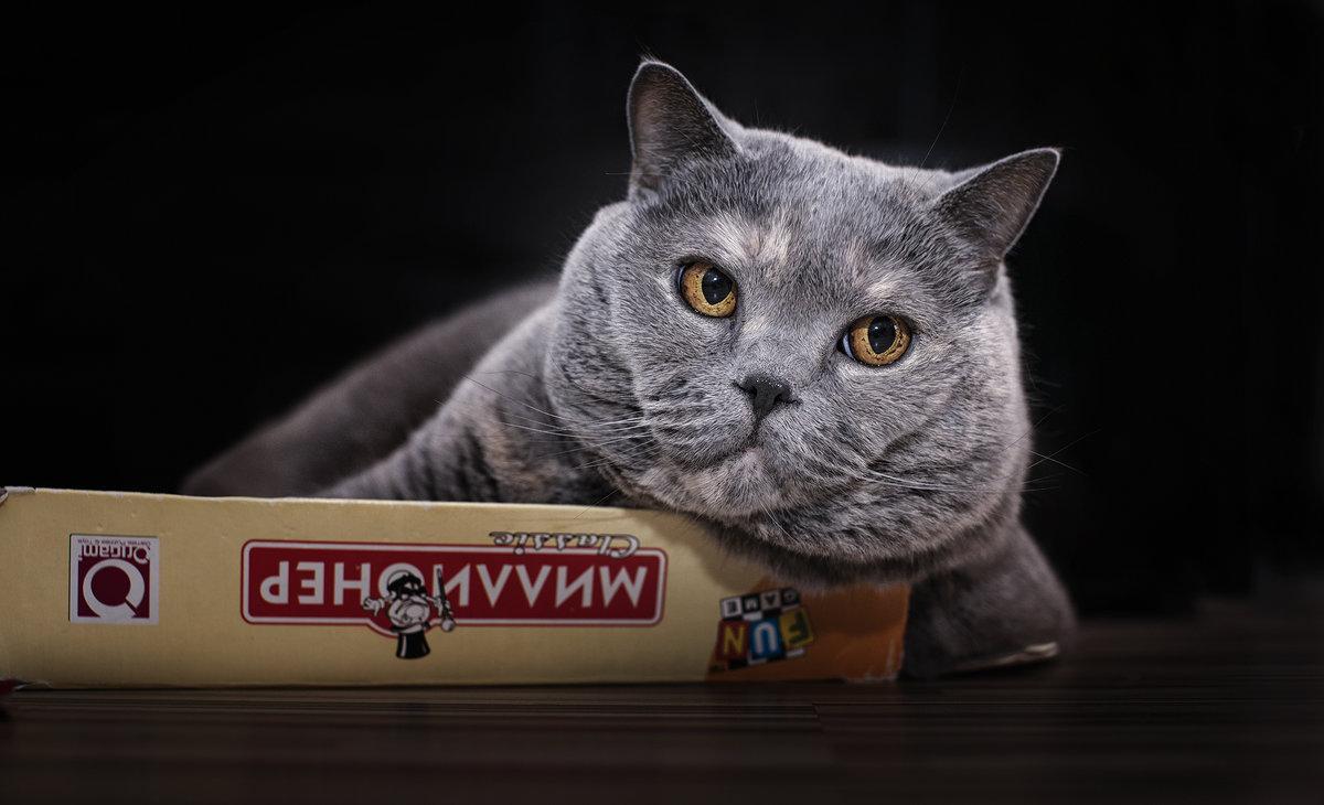 Итальянка завещала своему коту 1,5млневро— Богатый преемник