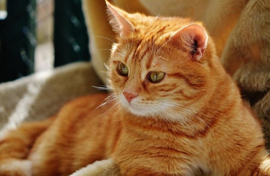 Размещен рейтинг приложений для собственников котов икошек