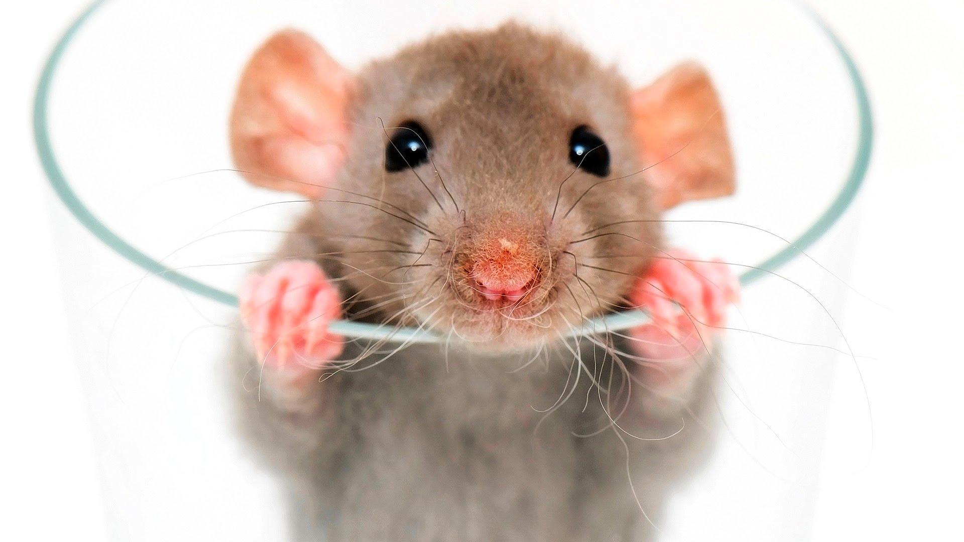 Ученые: Животные могут вспоминать прошедшее