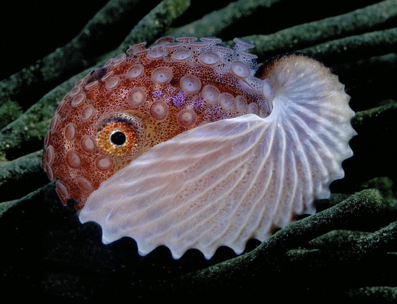 Ученые впервый раз  перенесли память одного живого существа другому