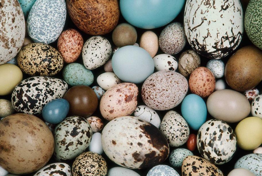 Стало известно, как однотонные динозавры высиживали яйца