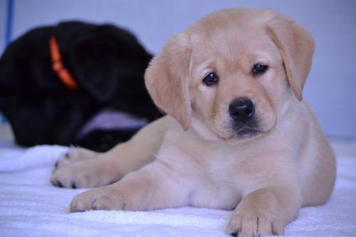 Учёные рассказали, как месяц рождения собаки влияет на её здоровье