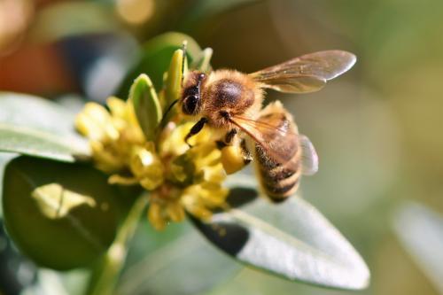 Учёные заявили о возможном вымирании популяций пчёл на Земле