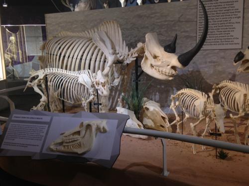 Жители Ростова шокированы скелетами мерзких чудовищ