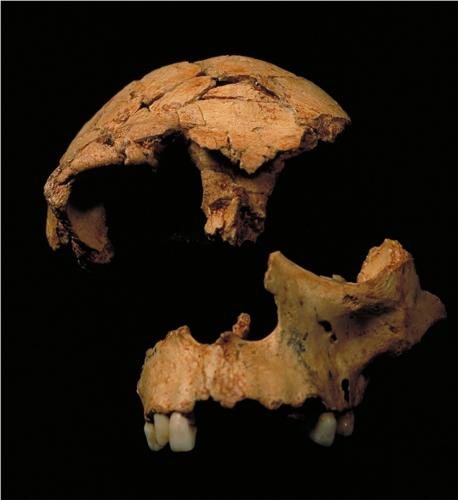 Ученые нашли древнейших в Европе пещерных людоедов