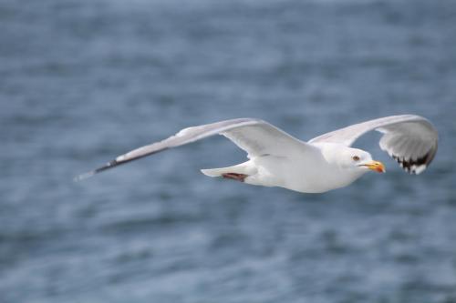 Ученые: Теплая вода мирового океана губит альбатросов