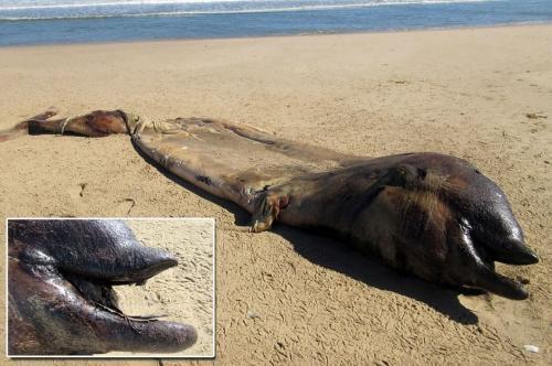 На африканский пляж вынесло морского мутанта-людоеда