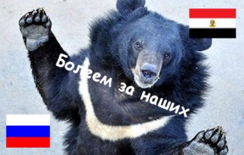 Белгородская «медведица-предсказательница» заранее определила исход матча Россия-Египет