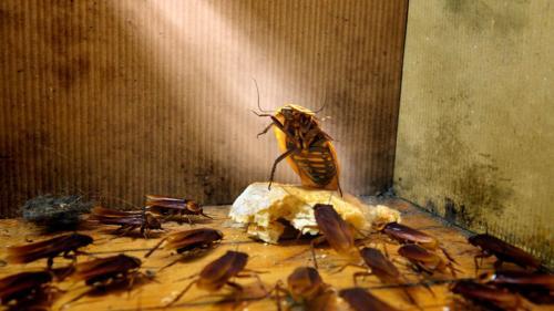 Жилой дом в Буденновске атакуют тараканы