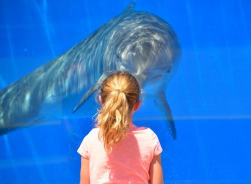Видео спасения попавшего в беду на Сахалине дельфиненка покоряет Сеть