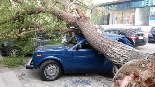 Шквальный ветер сломал деревья на улицах Москвы