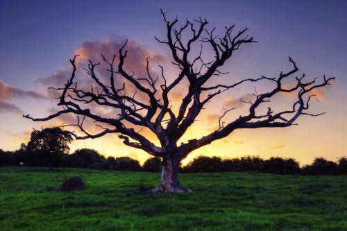 В США собирают базу ДНК для борьбы с незаконной вырубкой деревьев