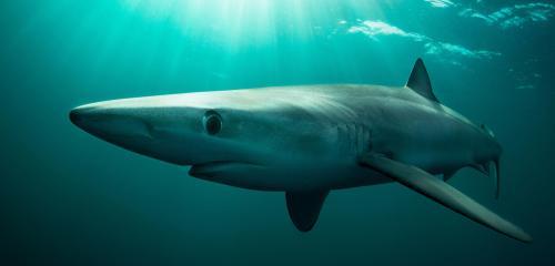 В Техасе рыбаки выловили из океана акулу со змеиными глазами