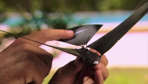 В Китае за жителями следят дроны-птицы