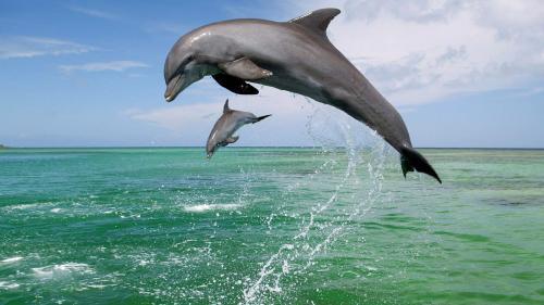 В сочинском лесу нашли мертвого краснокожего дельфина