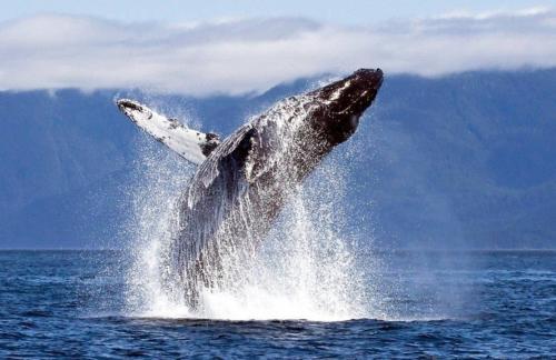 Прыжки гигантского кита напугали японских моряков