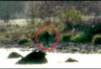 Охотник из Колорадо снял на камеру неуловимого «бигфута»