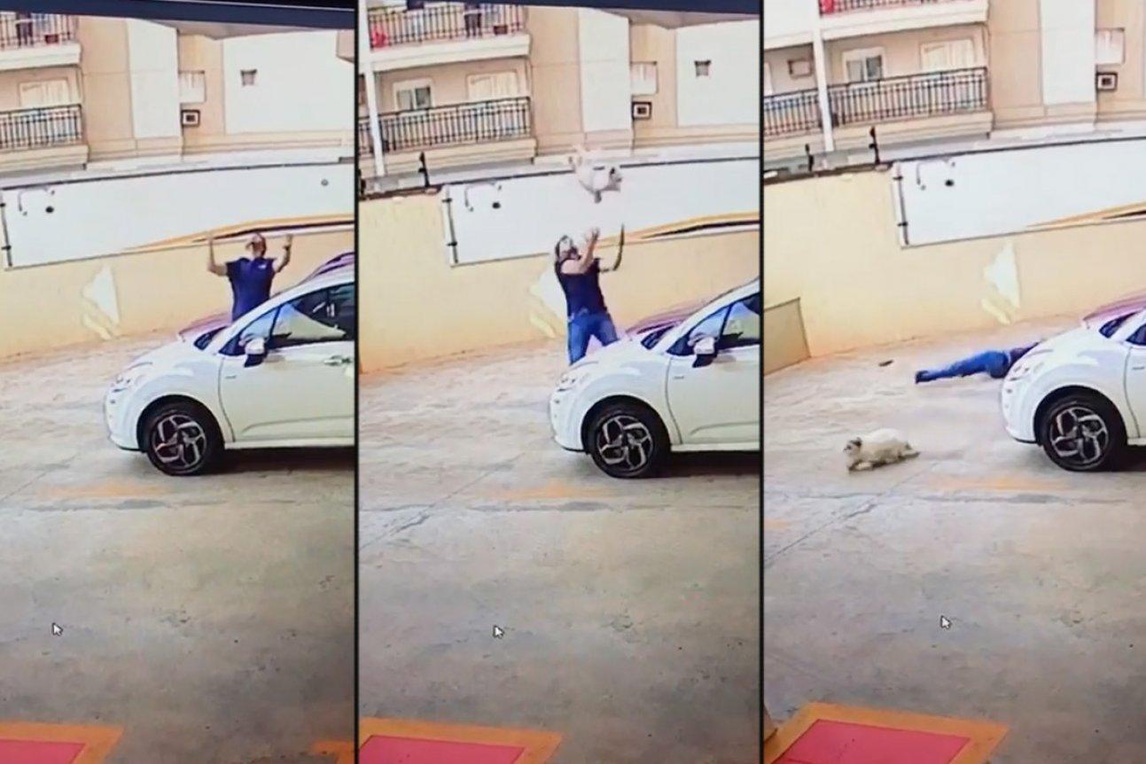 ВБразилии напроходящего мимо мужчину упала собачка сдевятого этажа