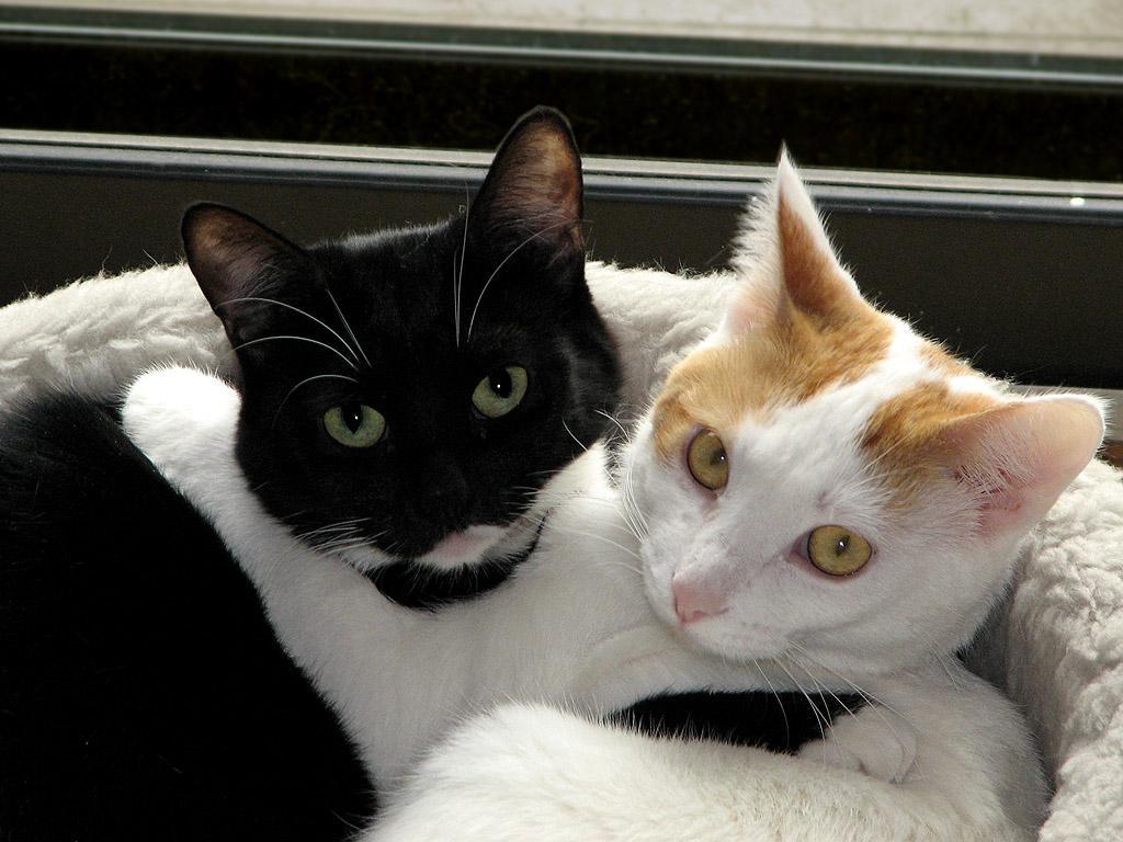 Кошки ощутили землетрясение за10 секунд доначала и изумили интернет