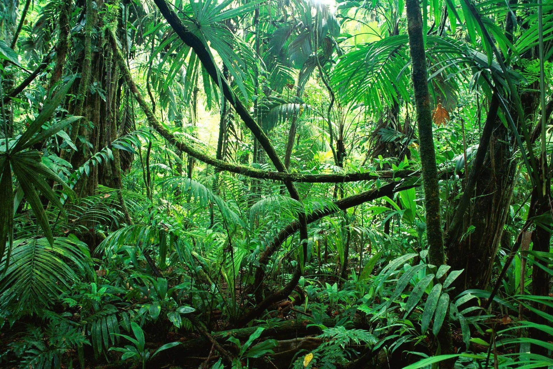 Живущего в тропических зарослях туземца-отшельника сняли навидео