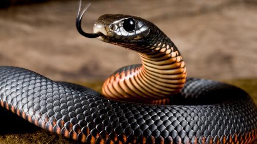 Шаманы доказали перемещение змей в другую реальность