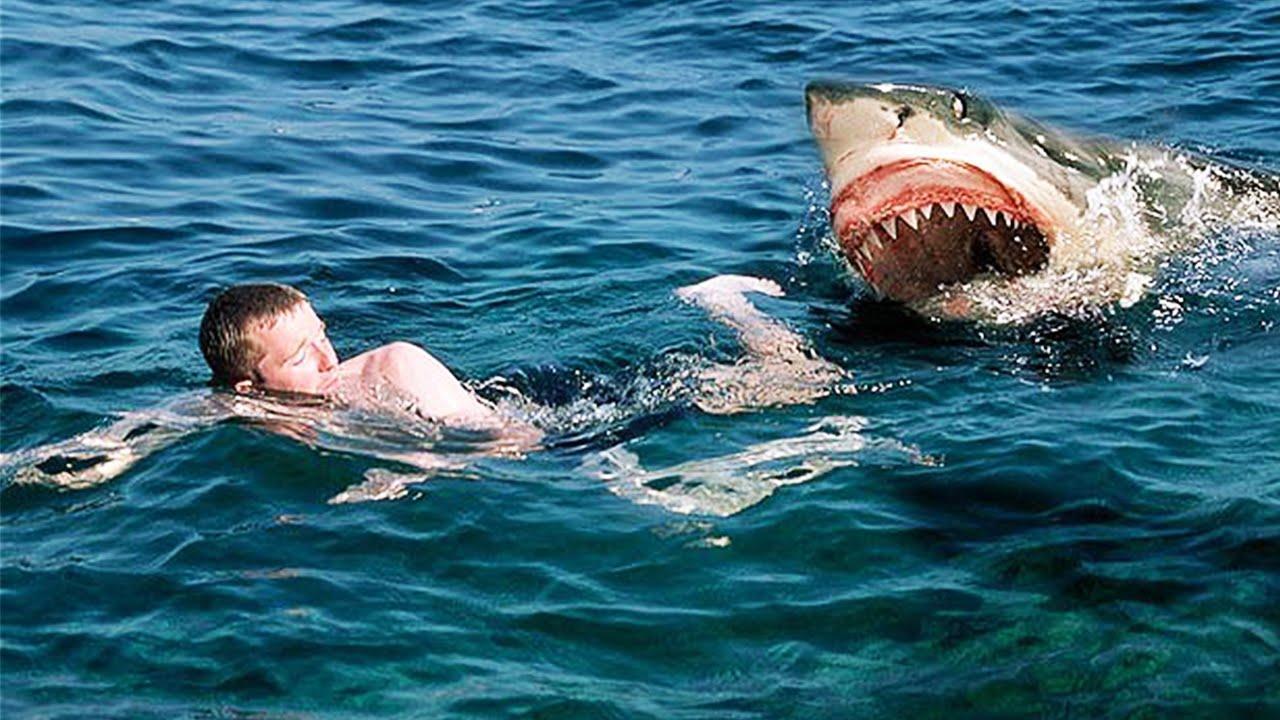 Наодном изегипетских курортов акула напала натуриста