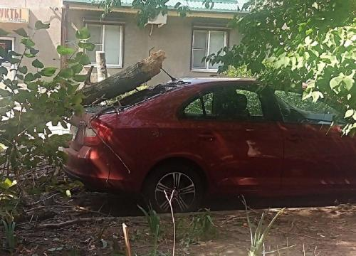 Рухнувшие деревья обесточили дома ростовчан и искорежили автомобили