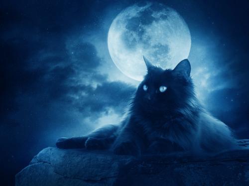 «Приглядитесь к питомцам»: Кошки ждут Нибиру - зоопсихологи