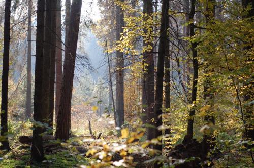 Белорус приклеил скотчем к дереву в лесу голого соседа-«вора»