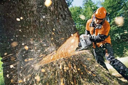 «7 лет за деревья»: Предпринимателя обвиняют в вырубке леса на 1,5 млн
