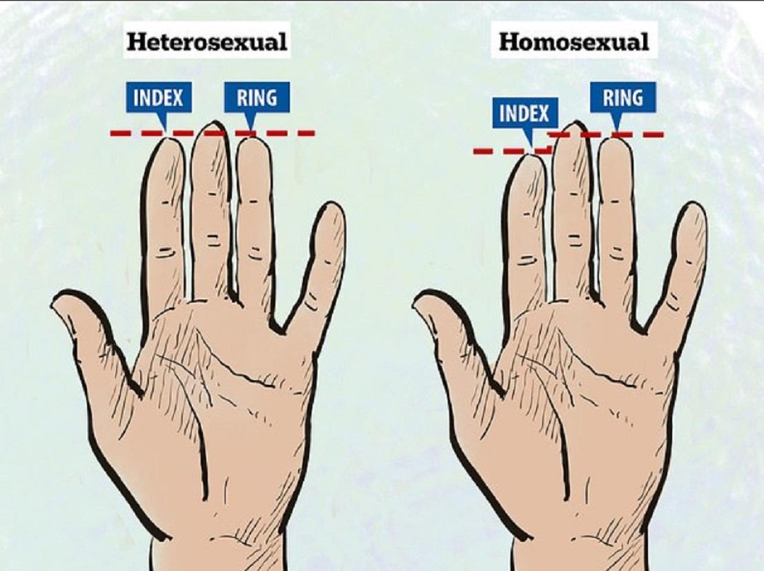 Длина пальцев на руке и сексуальность мужчины