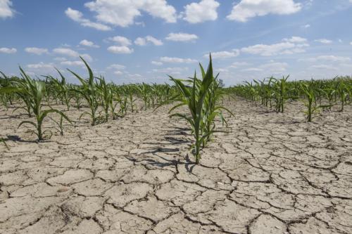 НАТО: Изменение климата на Земле препятствует усилиям по искоренению голода