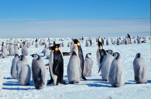 Экологи: Туристы наносят непоправимый ущерб популяции пингвинов