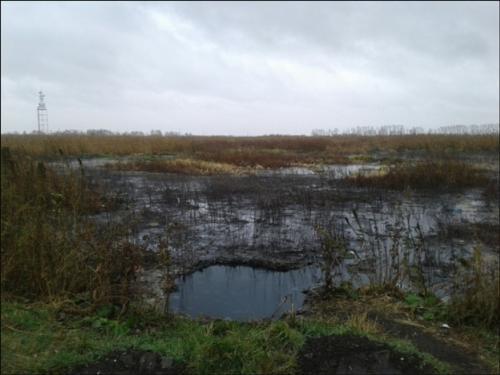 В Омской области обнаружили страшное место нечистот, откуда может распространиться эпидемия