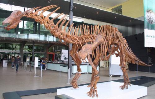 В пустыне Гоби обнаружили огромный скелет динозавра