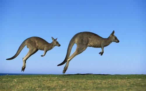 «Зверское избиение»: Огромный кенгуру напал на пожилую пару в Австралии