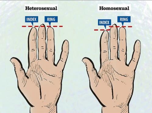 Как длина пальцев может выявить сексуальность рассказали учёные