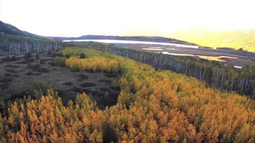 Экологи: деятельность человека уничтожает самый старый лес на планете