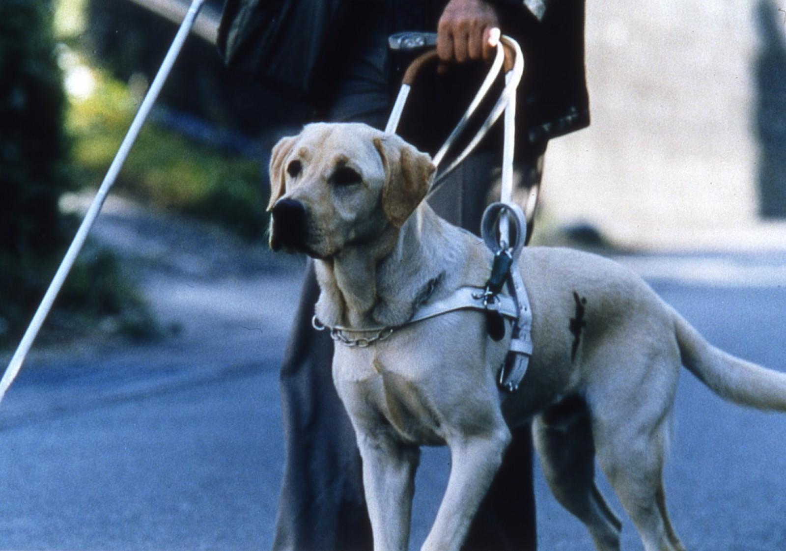 ВЕкатеринбурге кондуктор потребовала отинвалида оплатить проезд собаки-поводыря